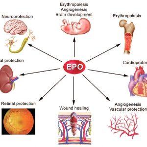 EPO- Erythropoietin